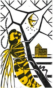 wasps-nest